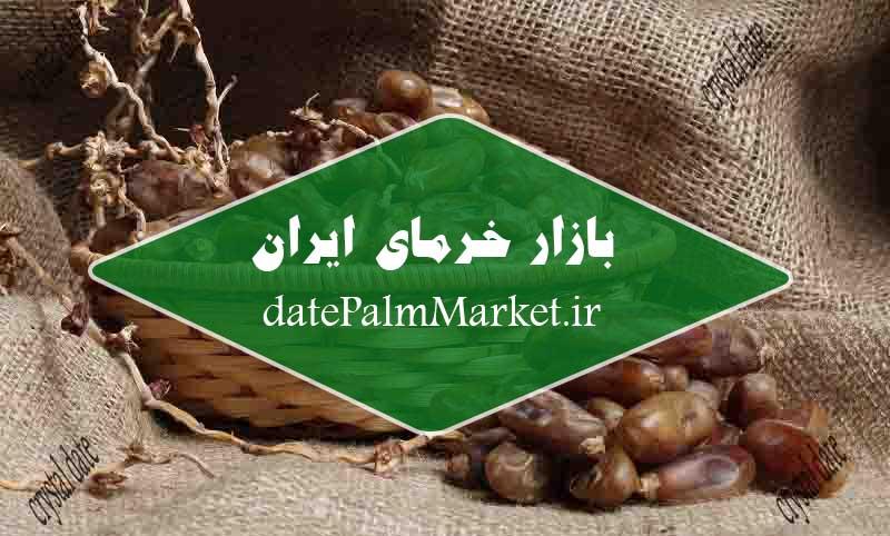 قیمت بازار خرمای شاهانی بندر عباس